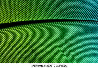 Iimage of a piece of bird feathers, close-up. The feather is highlighted in green light.