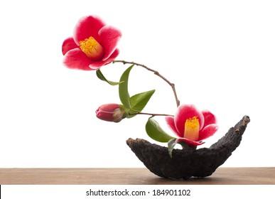 ikebana with camellia flowers