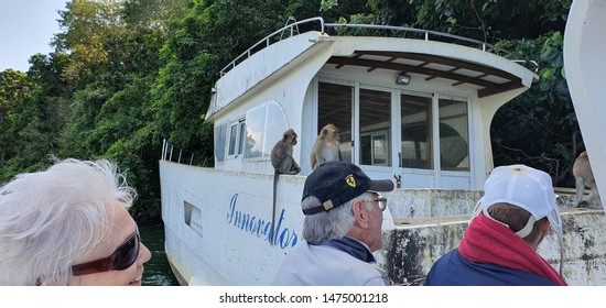 ILE AUX CERF, MAURITIUS 18,2019. A group of people admiring balinese monkeys sitting on an old rusted boat along the banks of the mangroves in Mauritius.