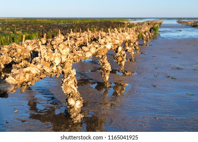 Ile de Ré - Landscape with oyster banks in the sea