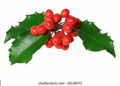 Ilex aquifolium - Branch of Holly with red berries, isolated on white.
