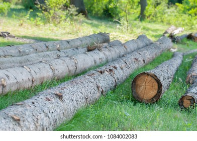 Illegal cutted pine logs in the woods, lefted behind in Romania.