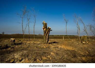 Illegal Felling of Forest Arrays. Deforestation, Destruction of Deciduous Forests. Damage to Nature. Ukraine. Europe. Pollution.