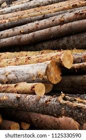 illegal logging, wood close-up