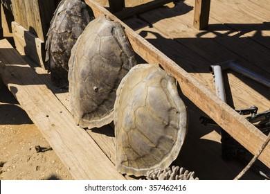 Illegal tortoise shell market