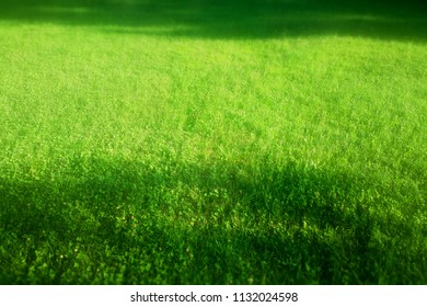 Illuminated green grass with shadows landscape background