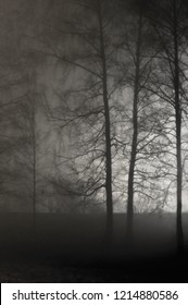 Illuminated Naked Leafless Branches, Vertical Light Misty Trees Silhouettes. Backlit Outdoor Night Mist Darkness Background In Sepia. Deserted Foggy Rainy Autumn Midnight Outdoors Solitude Scene.