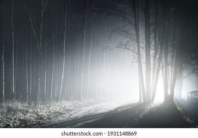 Nachts leuchtete Allee durch die mächtigen Bäume. Gruselige Waldszene. Baumsilhouetten im Dunkeln. Panoramabild mit einfarbigem Hintergrund. Natur, Umwelt. Stille, Einsamkeit, gotische Konzepte