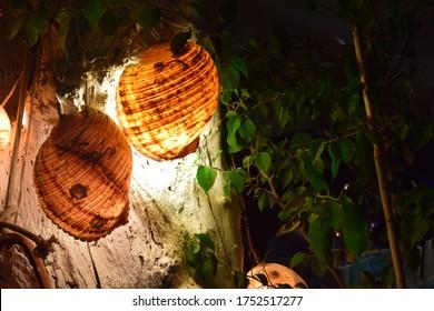 illuminated snail shells on the tree