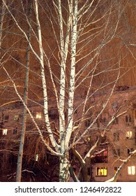 illuminated trees in winter time at night