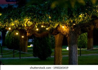 illumination garden light with electric garland of warm light bulbs on tree branches, dark illuminate evening scene of outdoors park nobody. - Shutterstock ID 1900265419