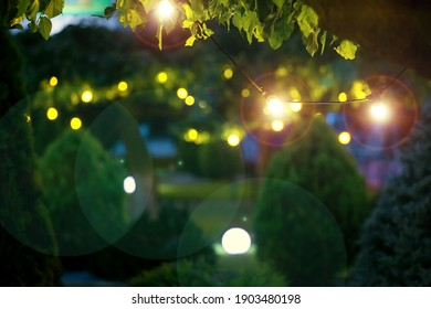 illumination holiday lights glare on garden with electric garland bulbs of warm light glow with round bokeh evening illuminate night scene of outdoor landscaped park with thuja bushes and tree nobody. - Shutterstock ID 1903480198