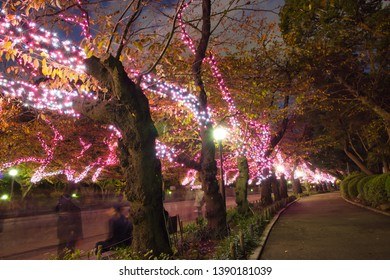 Illumination light decoration above the tree in main thoroughfare of Ueno Park, light up the way. Casual ramble, allowing you to truly enjoy the exotic and exhilarating.