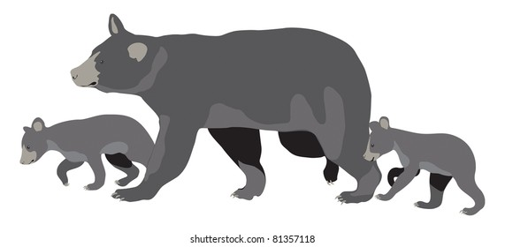 Illustration of American Black Bear (Ursus americanus) sow with two cubs