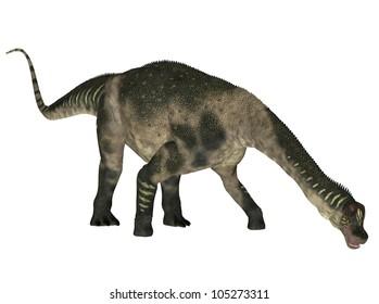 Illustration of a Antarctosaurus (dinosaur species) isolated on a white background