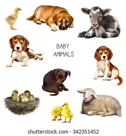 Illustration of baby animals: little birds in nest, beagle puppies, red shepherd puppy, black and white baby cow laying, black cute puppy, little ducklings and chick. isolated on white background