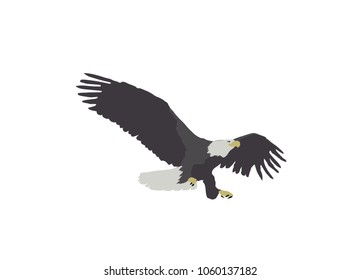 Illustration of a bald eagle landing with tallons out isolated on white.