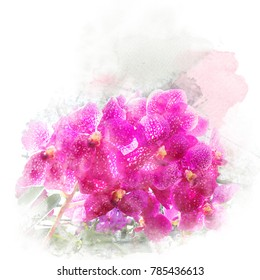 Illustration of beautiful blossom vanda orchid. Artistic floral abstract background. Watercolor painting (retouch).