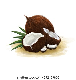 Illustration of broken and whole coconuts with leaves