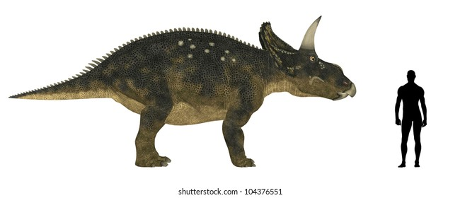 Illustration of a comparison of the size of an adult Nedoceratops (dinosaur species formerly known as Diceratops) with an average adult male human (1.8 meters)
