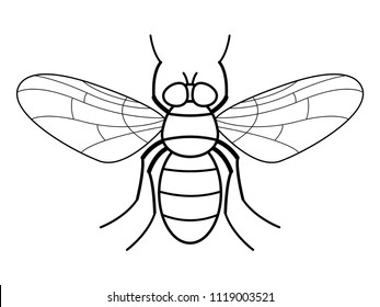 Illustration of the contour fly insect