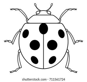 Illustration of the contour ladybug icon
