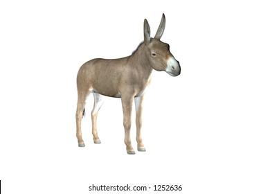 Illustration of a donkey or mule