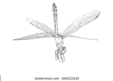 A illustration of a dragonfly on a white background. Its wings are spread open and legs are reaching outward.