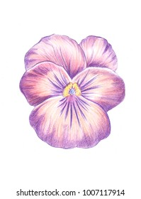 Illustration drawing of colored watercolor pencils flower bud of different species top view
