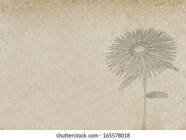 Illustration of a flower on parchment paper