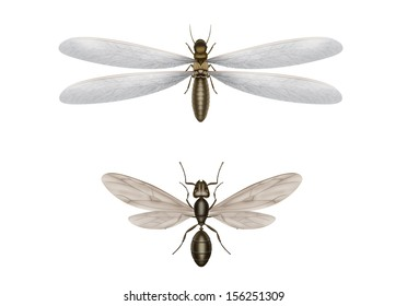 Illustration of flying termite and flying ant