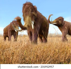 An illustration of a group of Woolly Mammoths feeding on wild grass in an ice age grassland during an autumn feast.