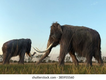 An illustration of a group of Woolly Mammoths grazing in a field in the morning sun.
