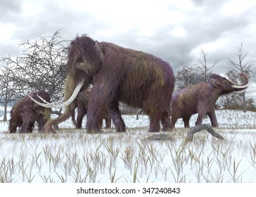 An illustration of a herd of Woolly Mammoths grazing in the early morning frost.