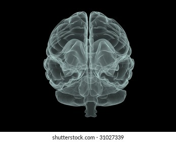 illustration of human brain in x-ray style