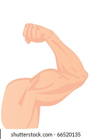 illustration a human hand and a biceps
