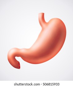 An illustration of human stomach