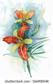 illustration of lily