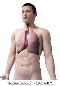 illustration of the lung of an asian male guy
