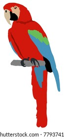 Illustration of macaw