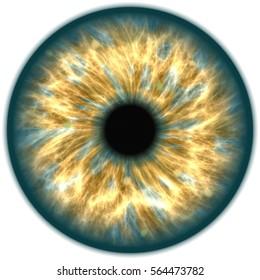 Illustration of a orange and dark blue iris. Digital artwork creative graphic design.