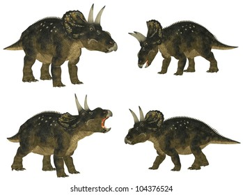 Illustration of a pack of four (4) Nedoceratops (dinosaur species formerly known as Diceratops) with different poses isolated on a white background