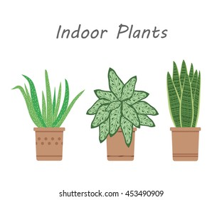 Illustration of plants that purify indoor air.