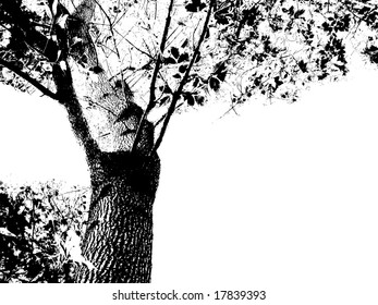 Illustration of a tree with room along side for text.