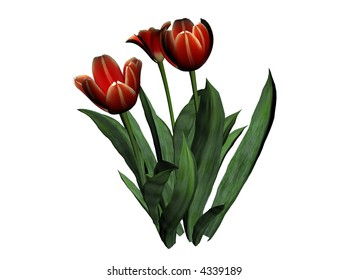 Illustration of a tulip