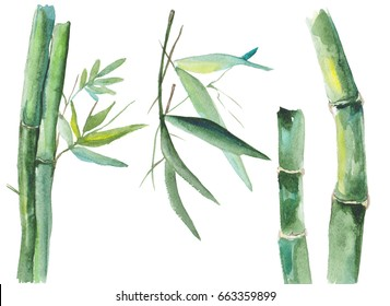 Illustration of watercolor bamboo isolated on white background