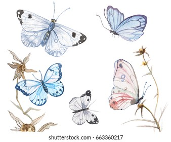 Illustration of watercolor butterflies isolated on white background