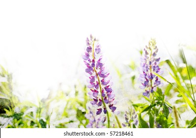 Illustration of watercolor lupine in a grass