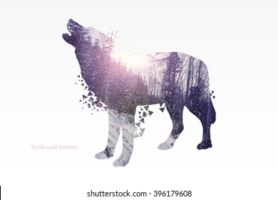 Illustration of wolf silhouette. Double exposure with colorful pink winter landscape of a forest. Poster for nature lovers