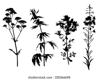 Daisy Flower Line Drawing : Vector set wild flowers herbs silhouettes stock